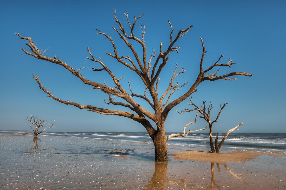 """""""Botany Bay"""""""
