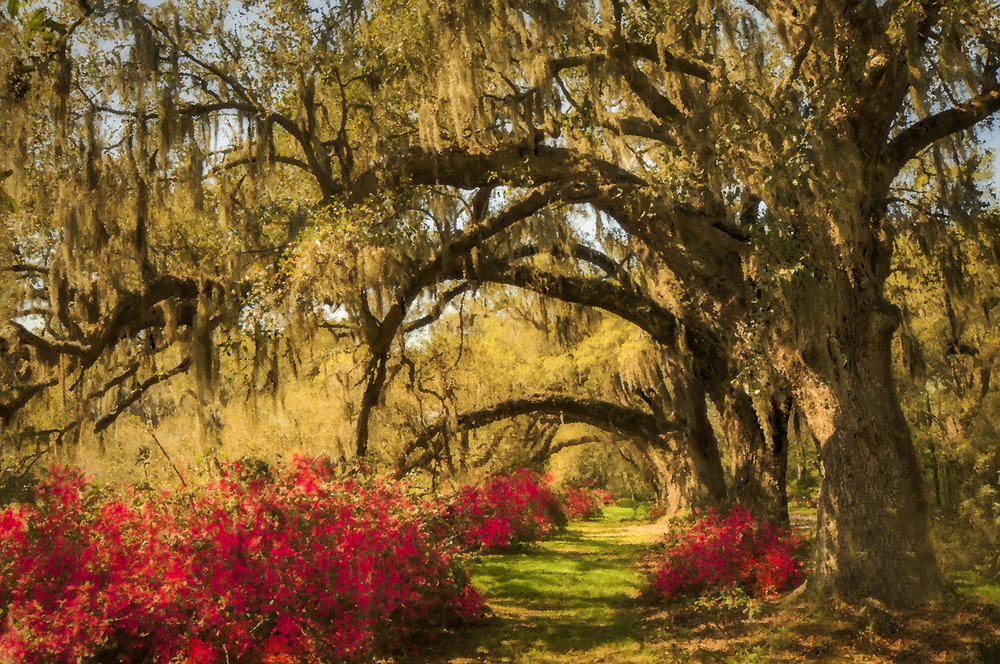 """ Oak Arches at  Magnolia Garden """
