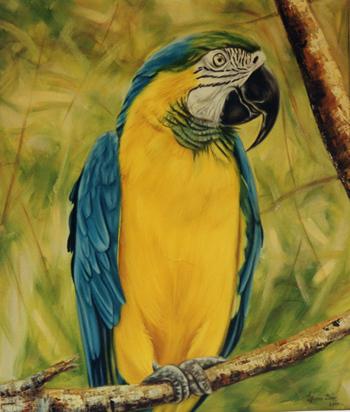 Macaw - livia-dias-art.jpg