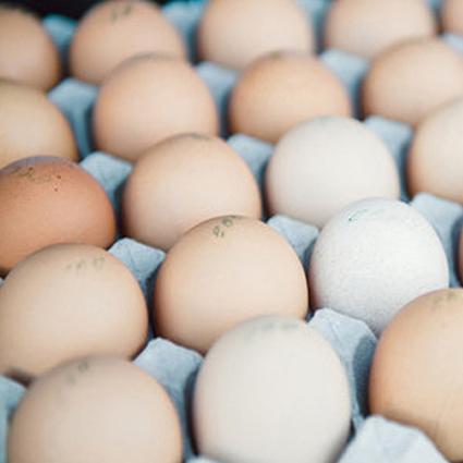csa pastured eggs.jpg