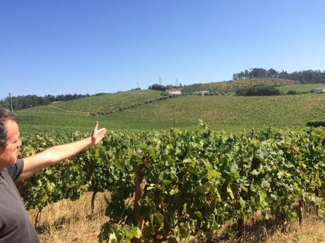 Portugal - Bairrada, Vinho Verde  Tiago Teles