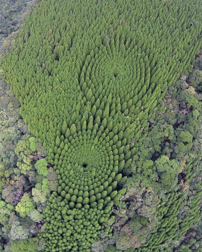 japan-tree-crop-circle-3.jpg