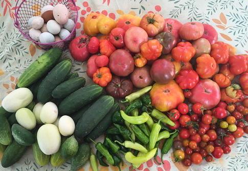 rachel's produce harvest.jpg