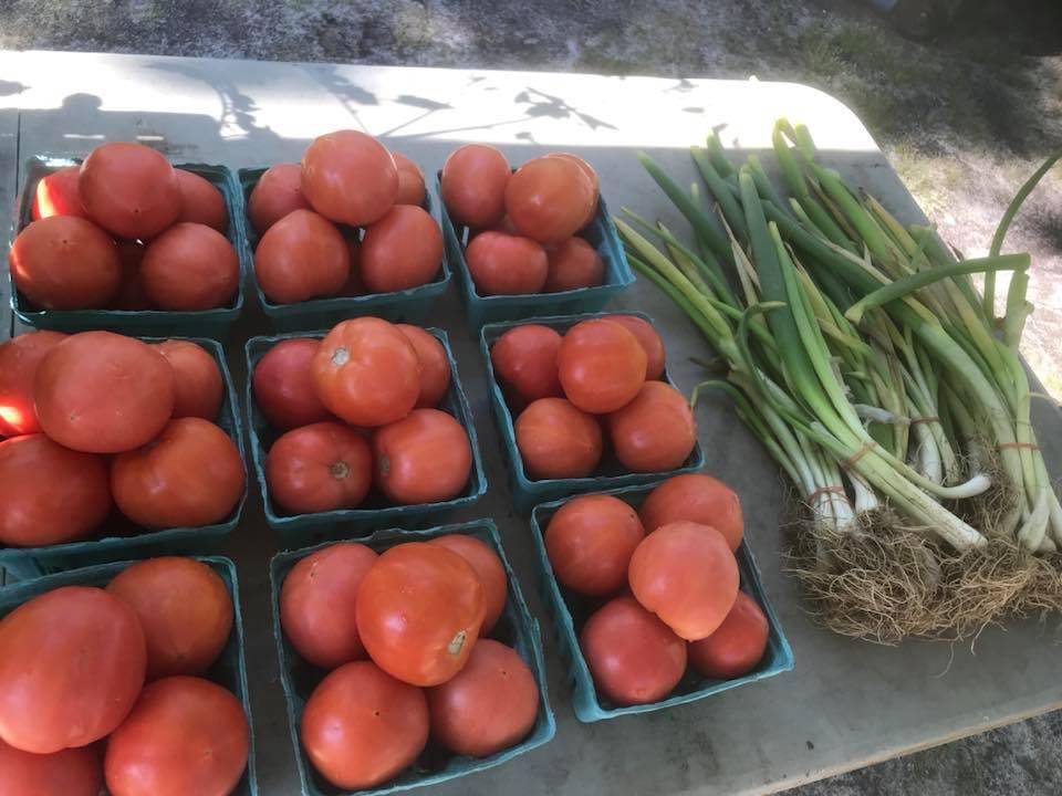 Fresh Tomatoes.jpg