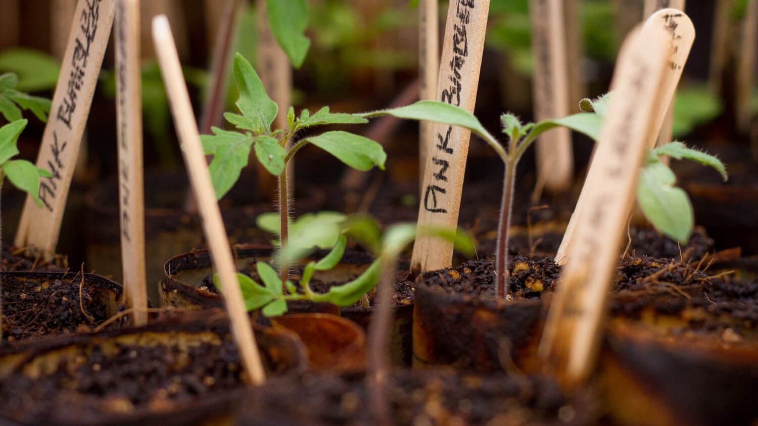 Seed Sowing Social Online Eci Ecological Culture Initiative