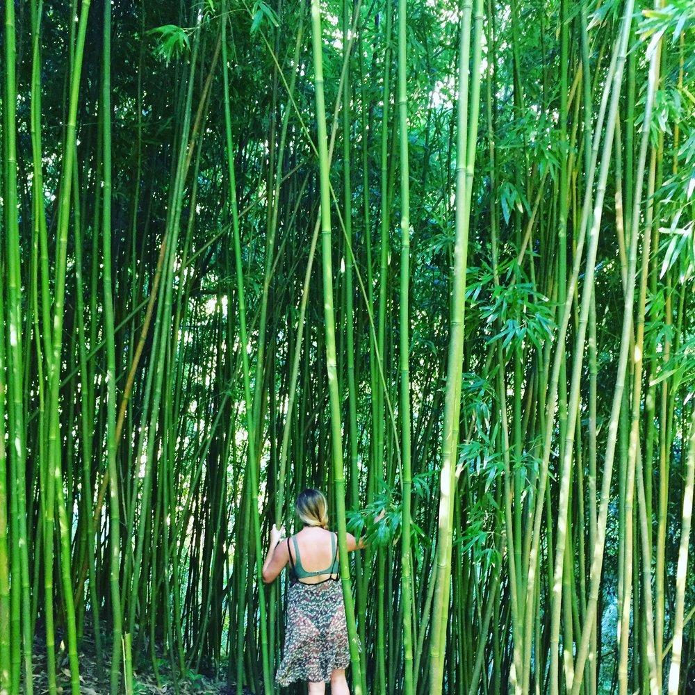 amanda in bamboo