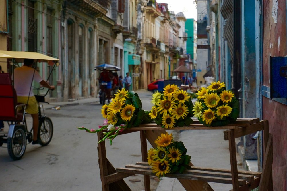 We came across a sunflower stand while roaming the streets.