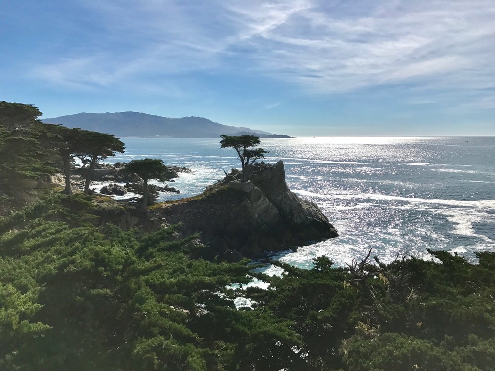 The Lone Cypress is one of the most photographed tress in all of North America and could be 250 years old!