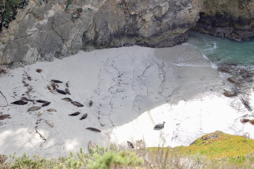 Seals sunbathing on the beach at Point Lobos.