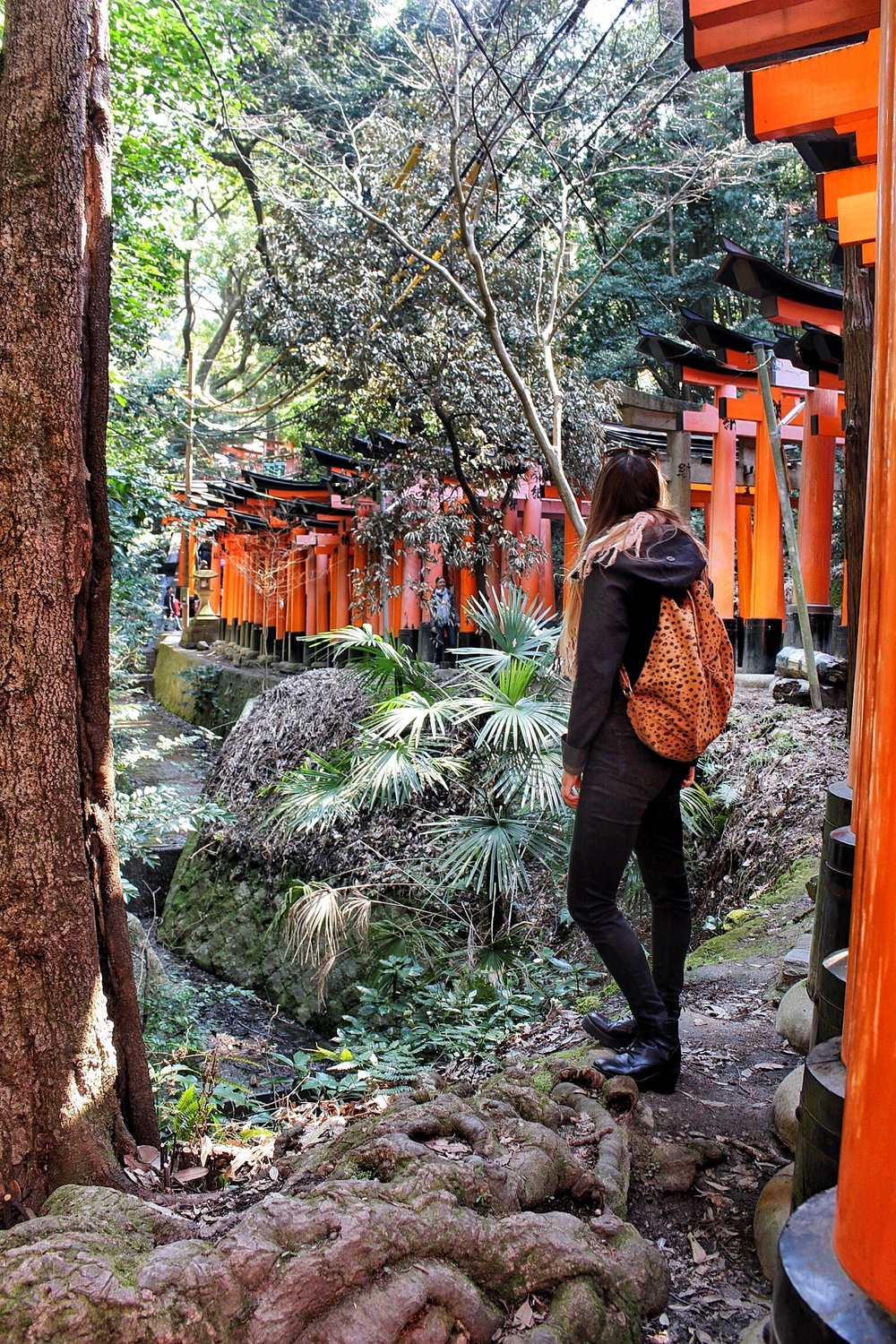 Exploring the  Fushimi Inari-Taisha Shrine  in Kyoto.