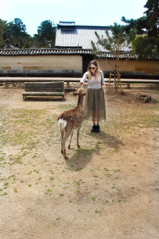 nara-park-deer.jpg