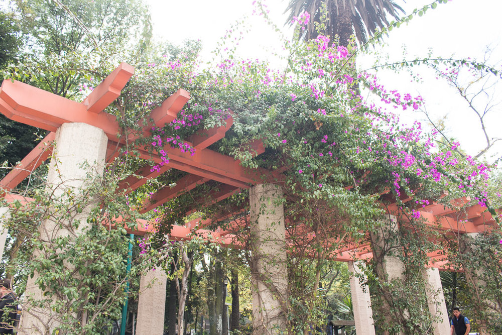 Gorgeous flowers in Parque Mexico.
