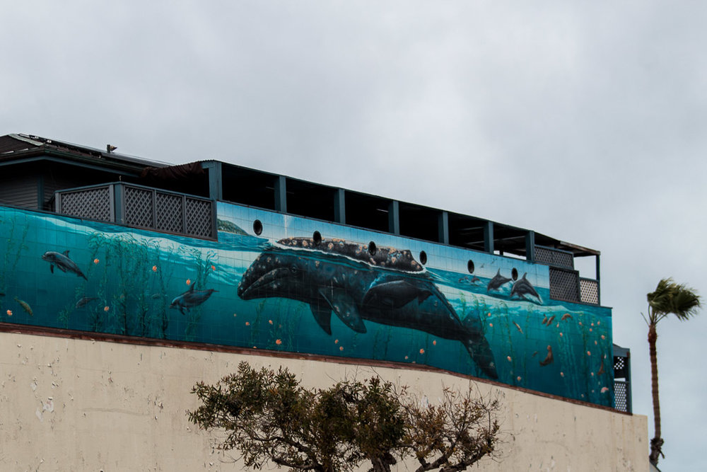 """This """"Whaling Wall"""" mural is located right across the street from Nick's. It was painted by the American artist,  Robert Wyland ."""