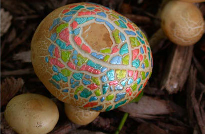 Painted Mushrooms (#35),  2002  Photograph
