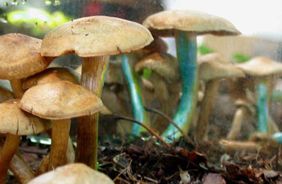 Painted Mushrooms (#41),  2002  Photograph