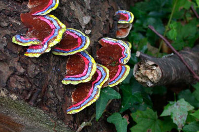 Painted Mushrooms (#49),  2002  Photograph