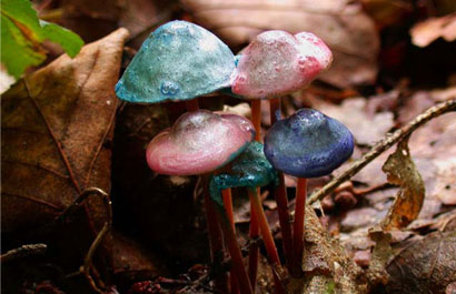 Painted Mushrooms (#55),  2002  Photograph