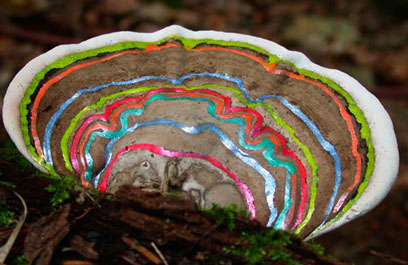 Painted Mushrooms (#61),  2002  Photograph