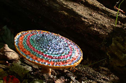 Painted Mushrooms (#63  ),  2002  Photograph