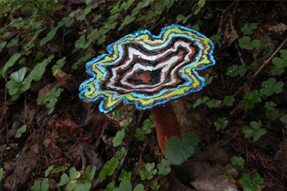 Painted Mushrooms (Canada),  2003  Photograph