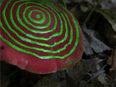 Painted Mushrooms (Indiana),  2003  Photograph