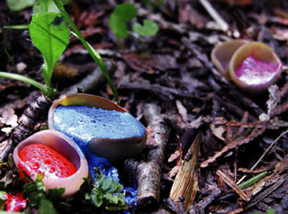 Painted Mushrooms (Wisconsin),  2003  Photograph