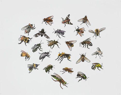 "Post-Audubon, Insects of North America, Flies,  2007  19"" x 24"" Sharpie/watercolor on paper"