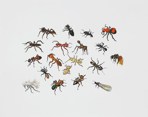 "Post-Audubon, Insects of North America, Ants & Termites,  2007  19"" x 24"" Sharpie/watercolor on paper"