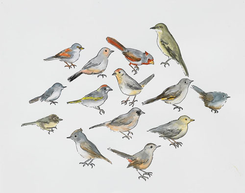 "Post-Audubon, Birds of North America, Perching Birds,  2008  19"" x 24"" Sharpie/watercolor on paper"
