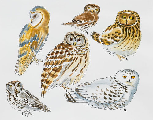 "Post-Audubon, Birds of North America, Owls,  2008  19"" x 24"" Sharpie/watercolor on paper"