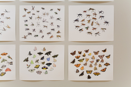 "Chazen Art Museum   North American Insects Birds & Plants (detail),  2007-2008  19"" x 24"" Sharpie & watercolor"