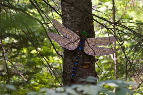 Lake Darner (invasive),  2007  Enamel on plywood  Forest Art Wisconsin, Northern Highland-American Legion State Forest