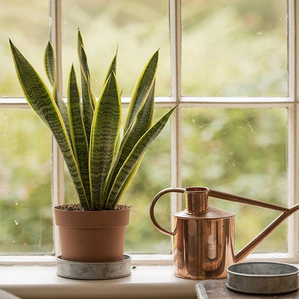 gardenplants.next.co.uk