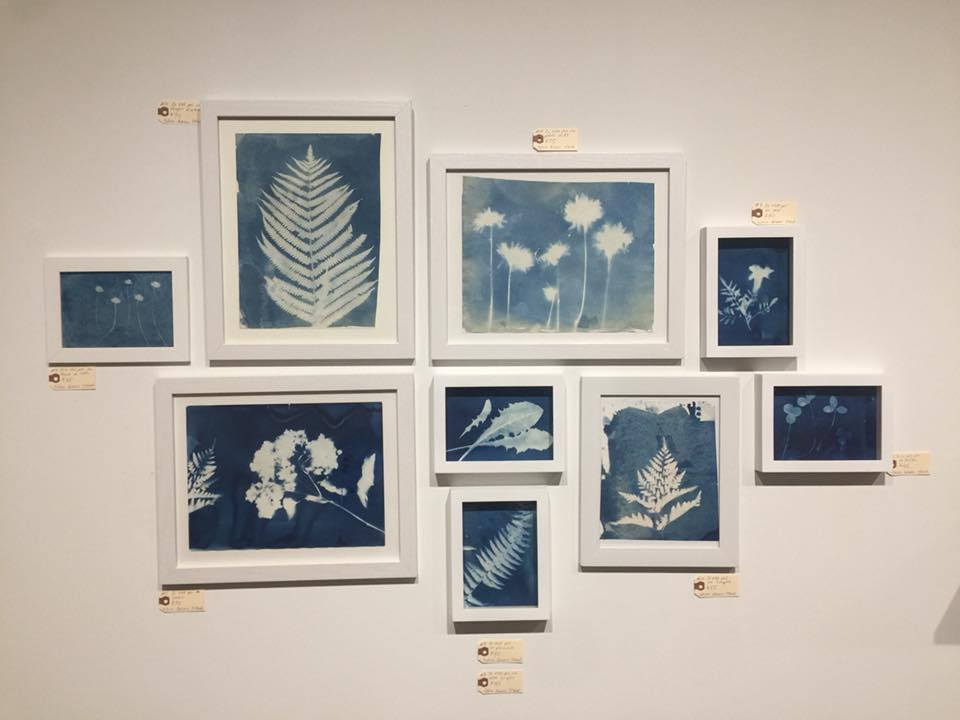 Cyanotypes by Colleen Gutwein O'neal
