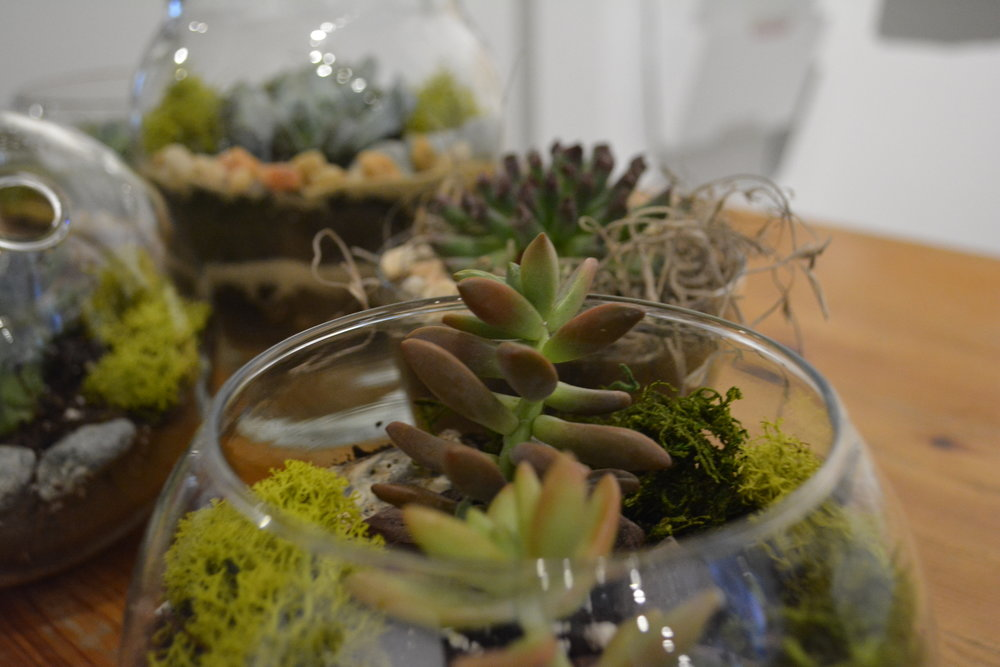 Terrariums by Fern & Fossil