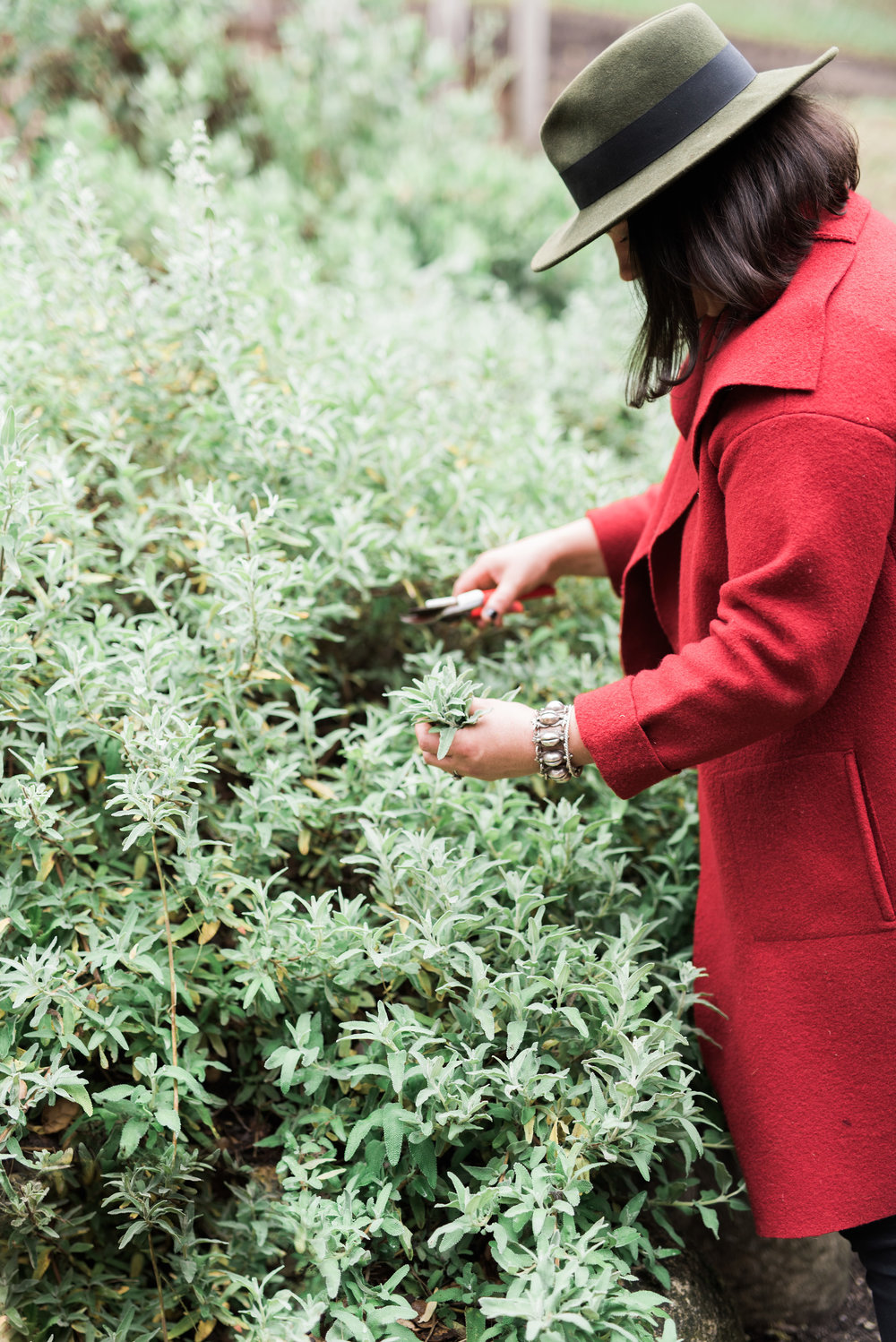 Harvesting sage from our native plant garden. Photo by  Angela Nunnink Photography