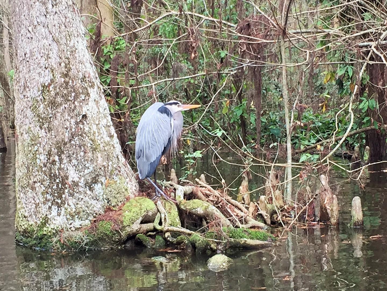 A bird in Dora Canal