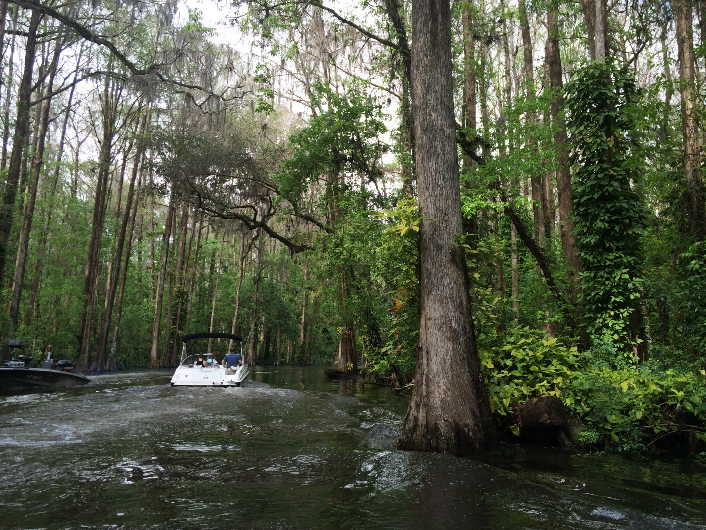 Tour Mount Dora lakes on a tiny two-seater boat.