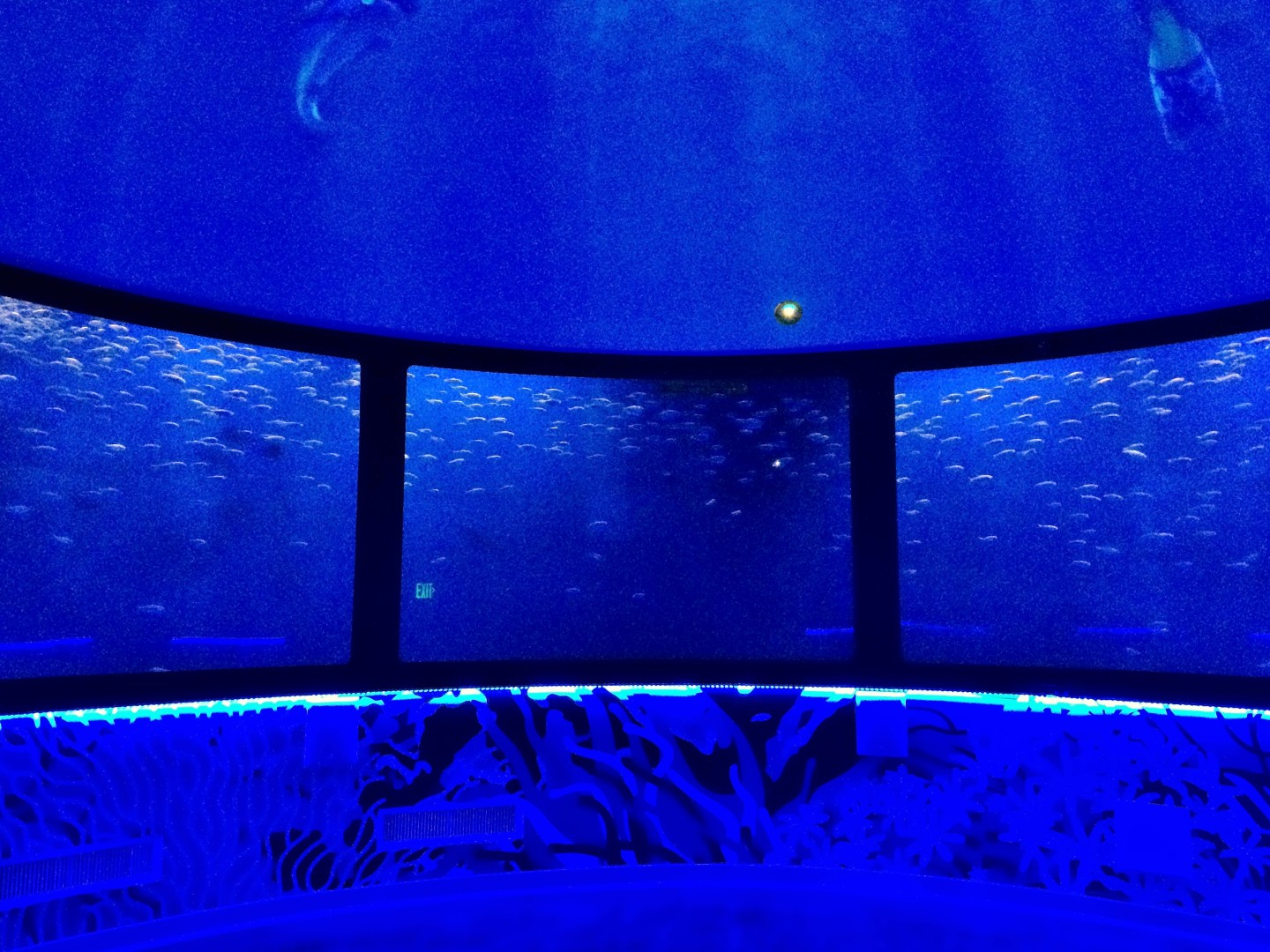 Fish swam around the middle while cartoon characters on the domed ceiling talked.