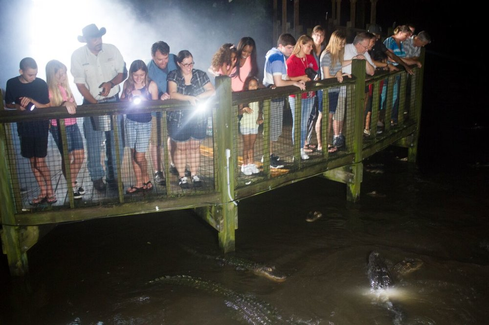 Now You Can Visit Gatorland in the Dark.jpg