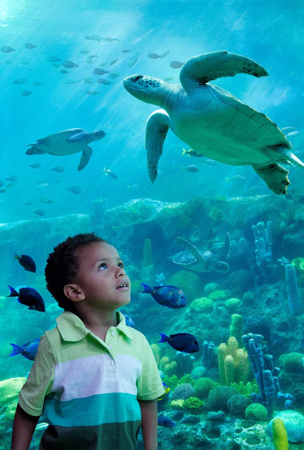 Go Behind the Scenes at SeaWorld Orlando.jpg