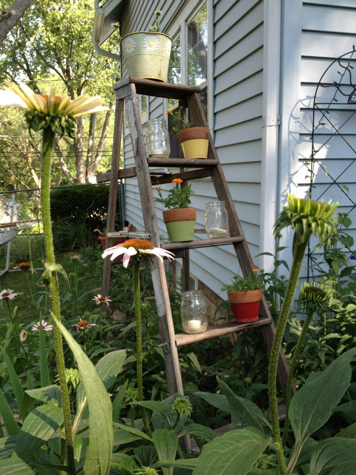 Start your home garden with tips from a Master Gardener in Madison WI