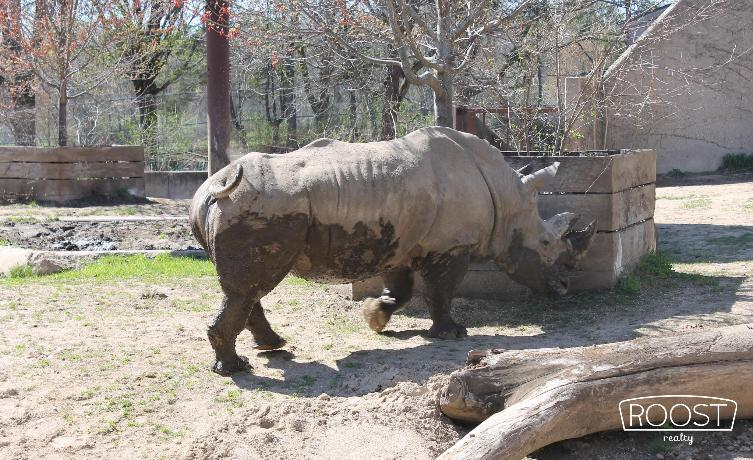 Rhino from Henry Vilas Zoo