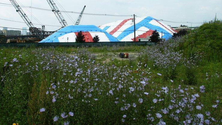 02_blue_flowers.jpg