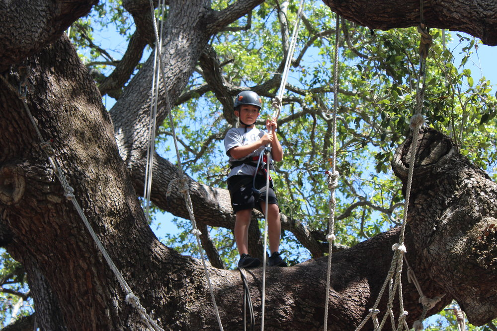 Boy standing in tree.jpg