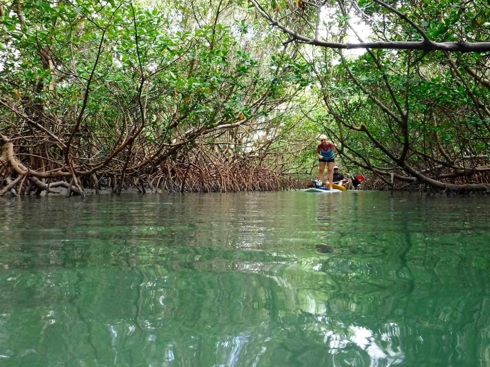 Mangrove SUP