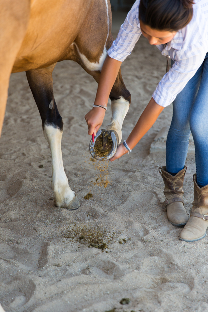 Thacher_HorseFinals-21.JPG