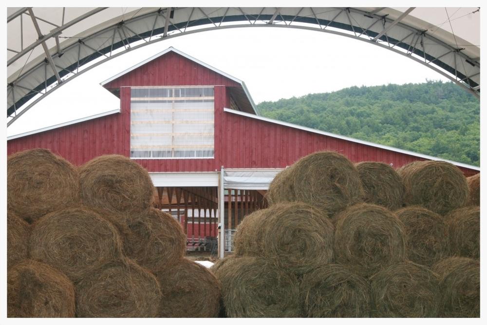 Farm-Summer-2012-87-1024x683.jpg
