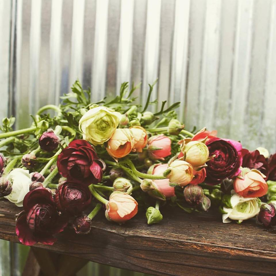 Ranunculus for days from Front Porch Farm.