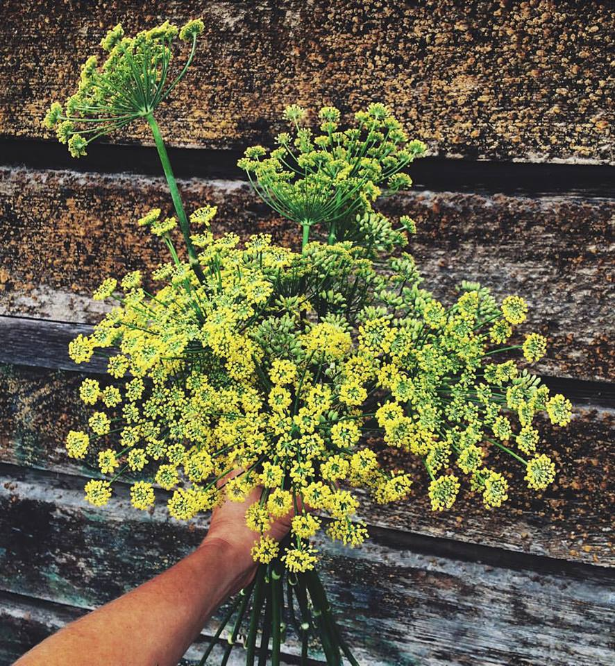 Wild fennel foraged from First Light Farm.